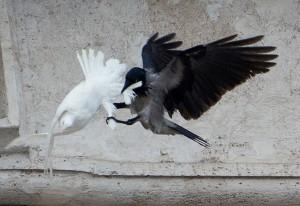 Corvo come pomba