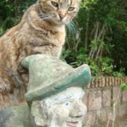gato_voador_2